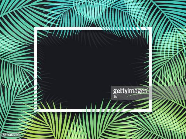 Palm Frame Background