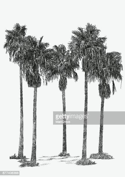 Restaurante Palm Grove