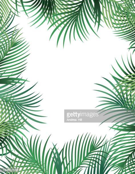 palm leaf border - coconut leaf stock illustrations, clip art, cartoons, & icons