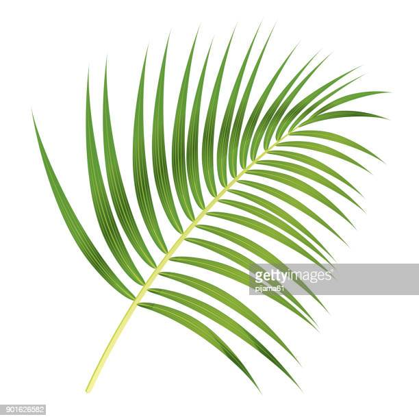 palm leaf - coconut leaf stock illustrations, clip art, cartoons, & icons