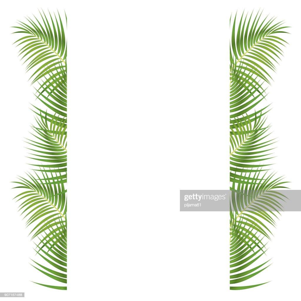 Palm Leaves Border : Stock Illustration
