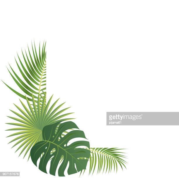 illustrations, cliparts, dessins animés et icônes de bordure de feuilles de palmier - flore