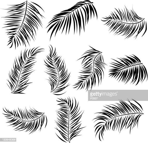 illustrations, cliparts, dessins animés et icônes de éléments de feuilles de palmier - feuille de palmier