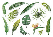 Palm leaves. Jungle hand drawn trees, floral vintage banana coconut decorative plants, green exotic monstera leaf. Vector palm set