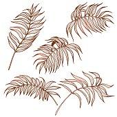 Palm leaves set