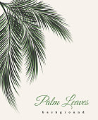 Palm leaves vintage background