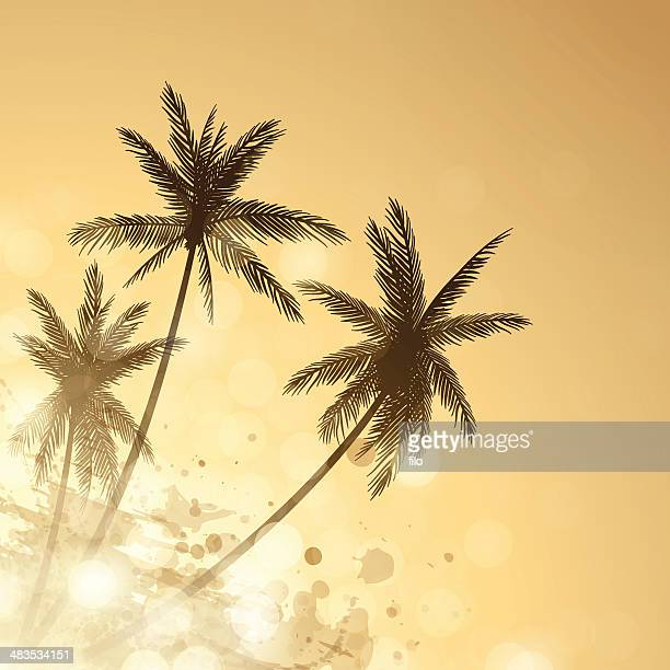 palm sunset background - coconut palm tree stock illustrations, clip art, cartoons, & icons