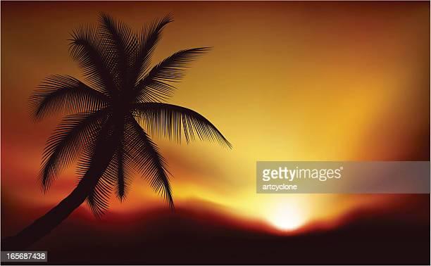Palme bei Sonnenuntergang