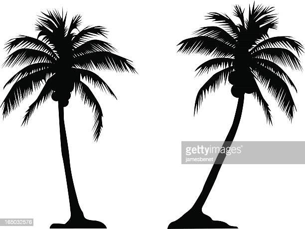 palm tree couple (vector) - coconut leaf stock illustrations, clip art, cartoons, & icons