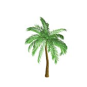 Palm tree. Isolated on white background. Isometric view.