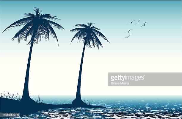 Palm tree on beach - VECTOR