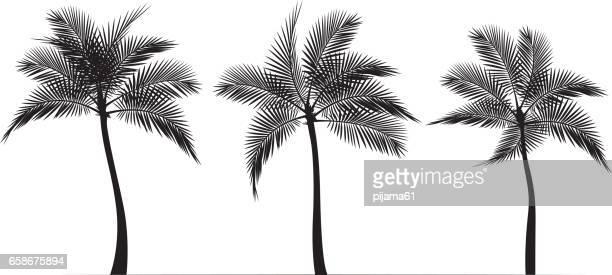 illustrations, cliparts, dessins animés et icônes de silhouettes de palmier noir et blanc - palmier