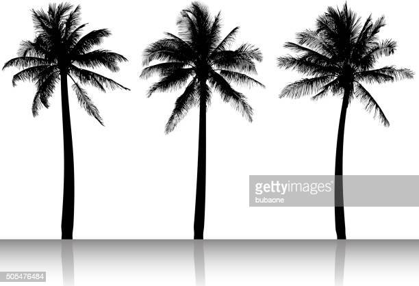 palm tree silhouettes black and white vector image - palm trees stock illustrations, clip art, cartoons, & icons