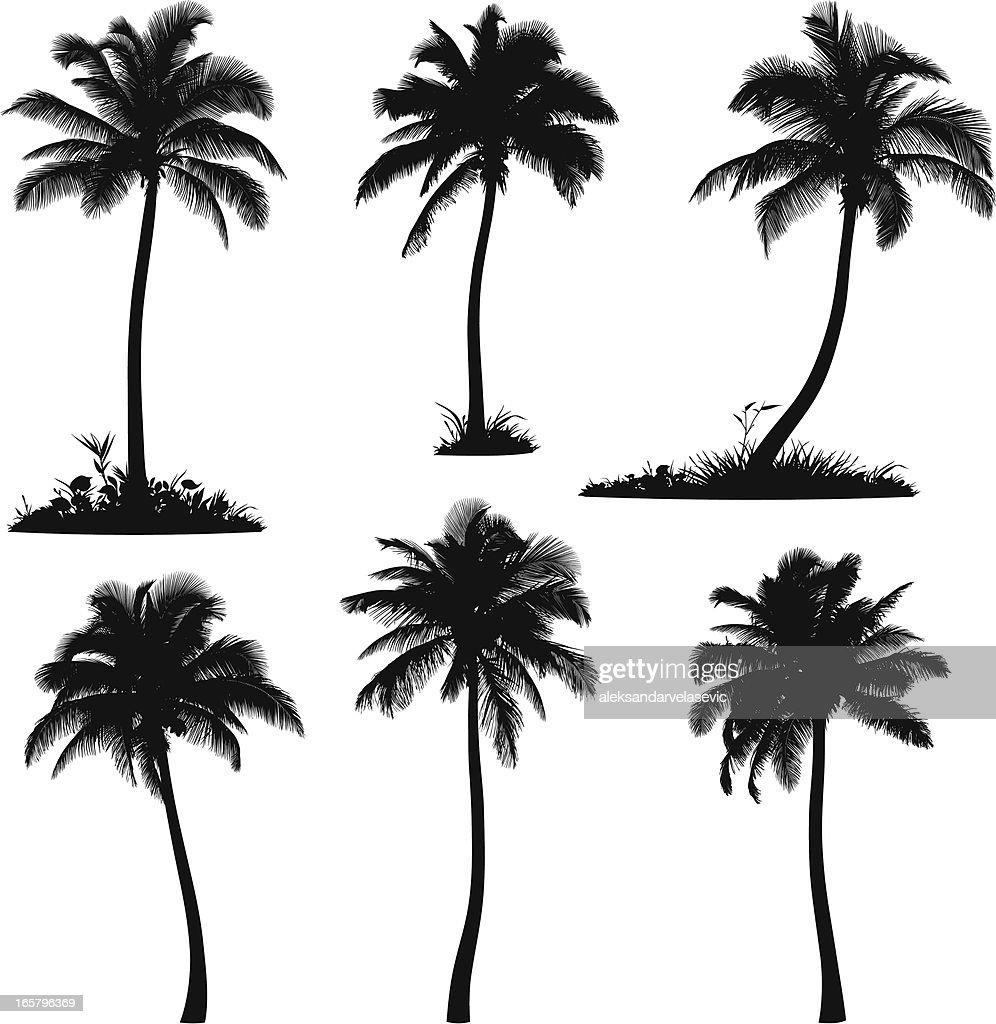 Palm Tree Silhouettes : stock illustration