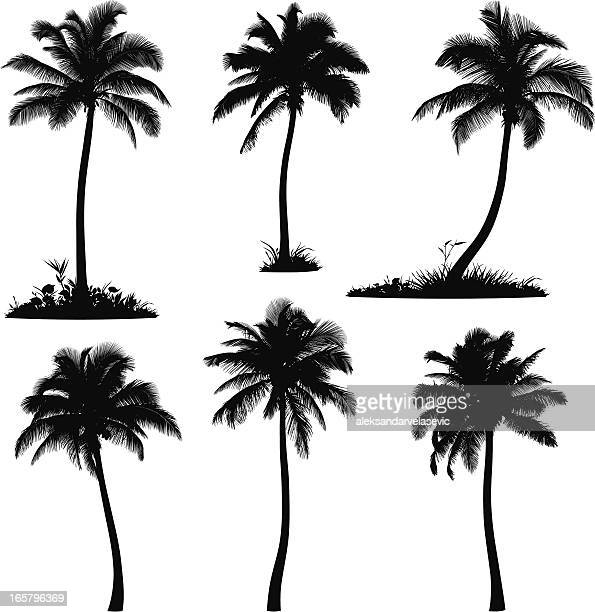 palm tree silhouettes - coconut leaf stock illustrations, clip art, cartoons, & icons