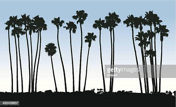 ilustraciones, imágenes clip art, dibujos animados e iconos de stock de palm tree silhouettes - palmera