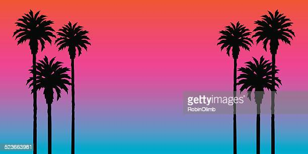 palm tree sunset background - palm tree stock illustrations