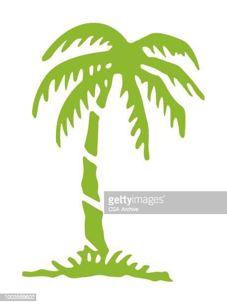 ilustrações, clipart, desenhos animados e ícones de de palmeira - cocos plant