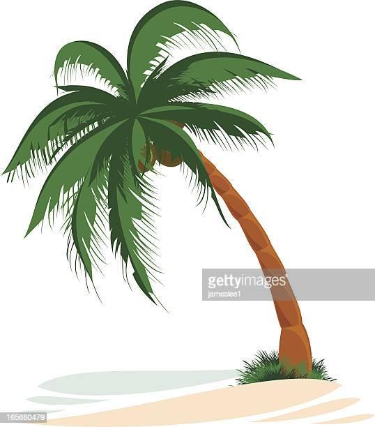 illustrations, cliparts, dessins animés et icônes de palm tree - cocotier