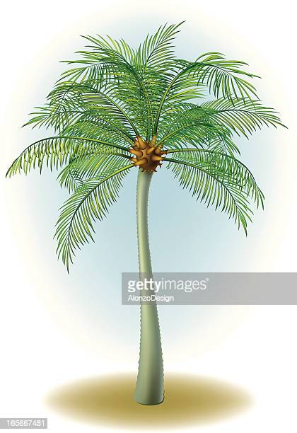 30 Top Tree Top View Stock Vector Art and Graphics - Getty Images