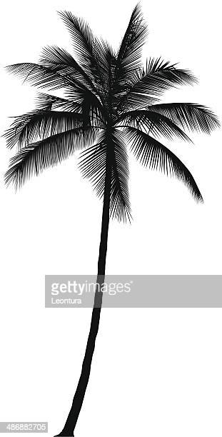 palm tree - coconut leaf stock illustrations, clip art, cartoons, & icons