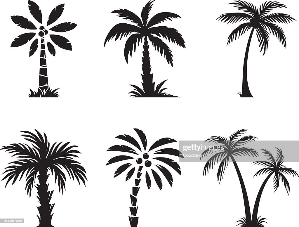 Coconut Palm Tree Stock Illustrations And Cartoons