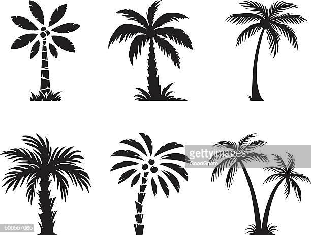 palm tree - palm tree stock illustrations