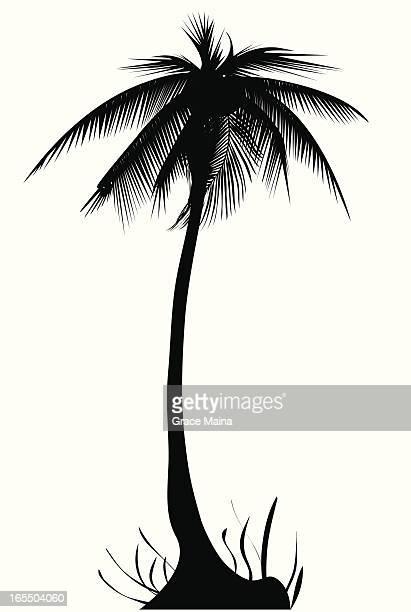 Palm tree - VECTOR