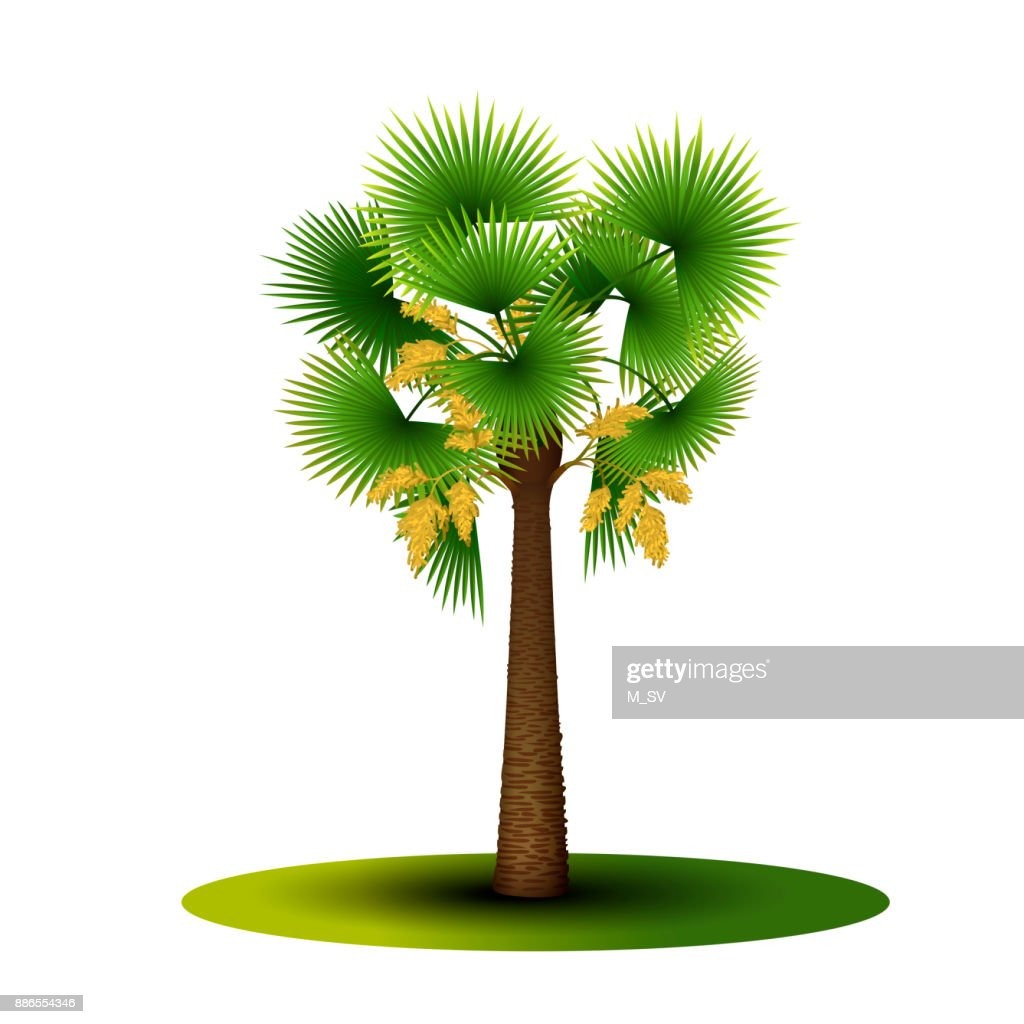 palm tree with green leaves and flowers