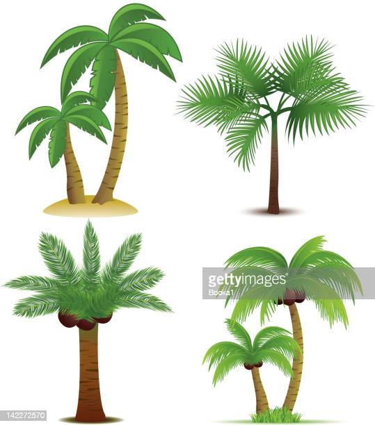 palm trees collection - coconut palm tree stock illustrations