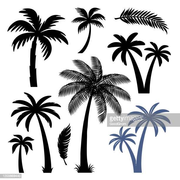 palm trees design elements set - coconut palm tree stock illustrations