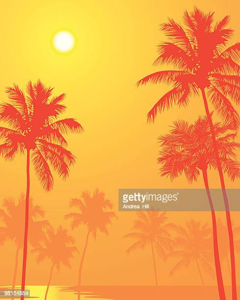 Palm Trees on a Hot Summer Day