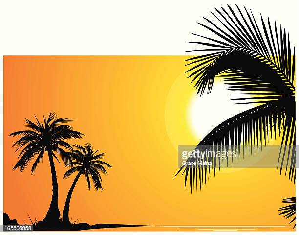 palm trees on perfect sundown - vector - coconut palm tree stock illustrations, clip art, cartoons, & icons