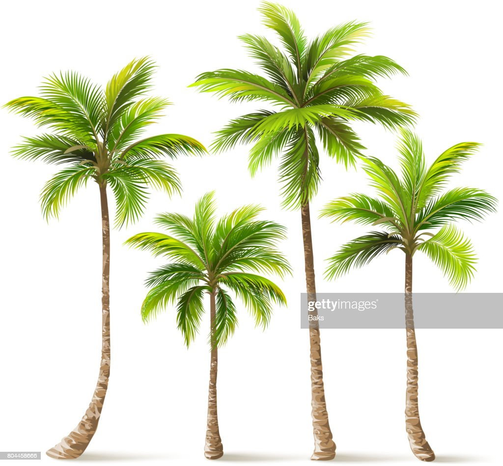 Palm Trees Set. Vector
