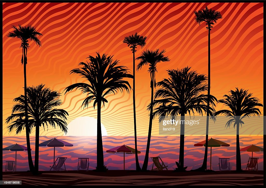 Palm trees silhouette at sunset.