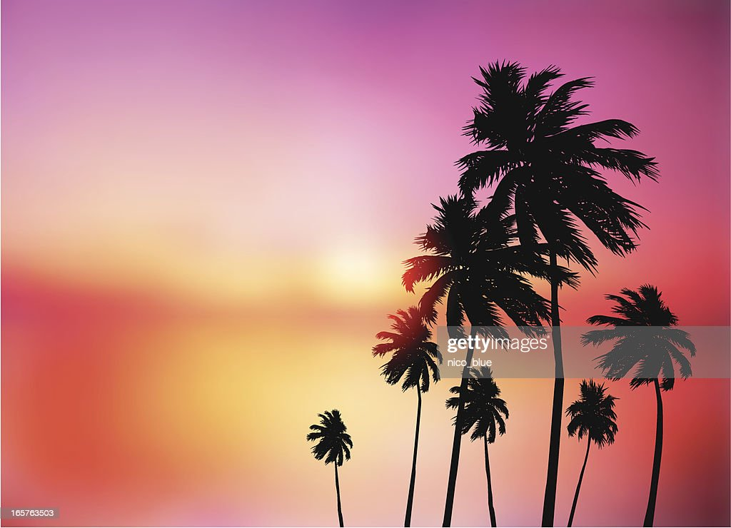 Palm trees sunset : stock illustration
