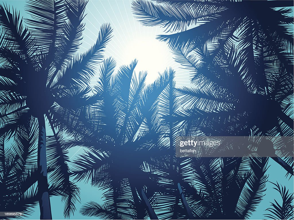 Palm trees : stock illustration