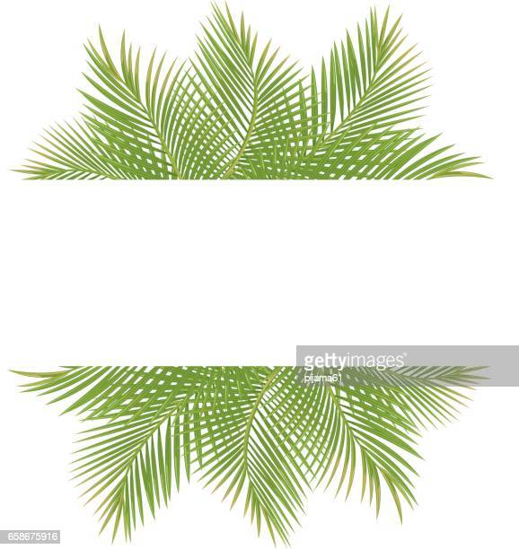 palm trees - coconut leaf stock illustrations, clip art, cartoons, & icons