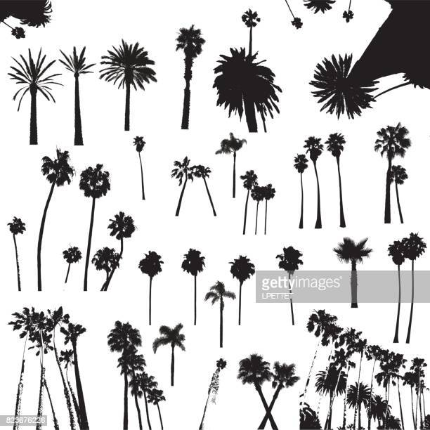palm trees - palm tree stock illustrations