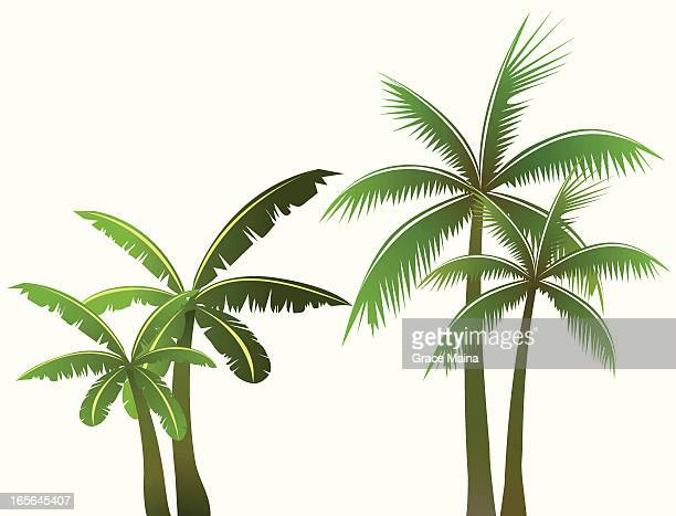 palm trees - vector - coconut palm tree stock illustrations, clip art, cartoons, & icons