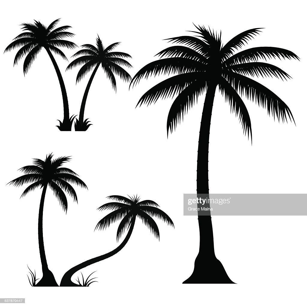 palm trees vector vector art getty images rh gettyimages com palm vector junior palm victory
