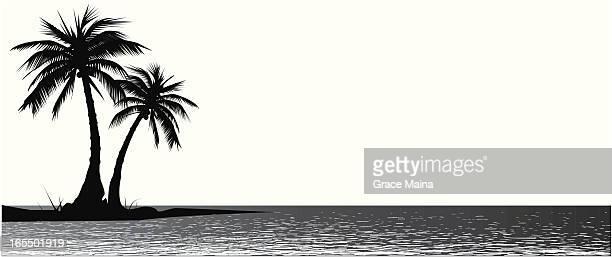 Palm tress - VECTOR