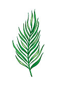 Palm tropical leaf hand drawn sketch. Exotic forest tree icon. Realistic vector illustration isolated on white background. Green watercolor line handdrawn art for t-shirt print, logo design, icon