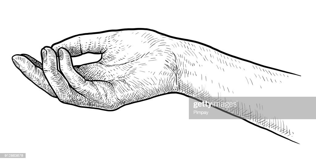 Palm up hand illustration, drawing, engraving, ink, line art, vector