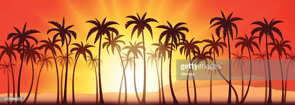Palms grove sunset