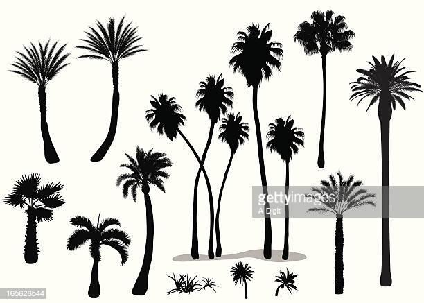 illustrations, cliparts, dessins animés et icônes de palms - palmier