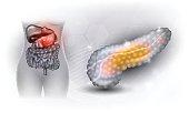 Pancreas anatomy and internal organs
