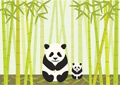Panda And Cub Eating Bamboo