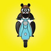 Panda racer in helmet on scooter. Hand drawn vector illustration
