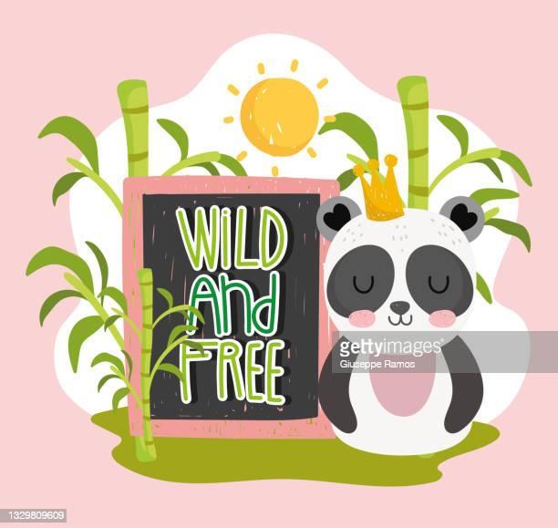 panda wild free cartoon